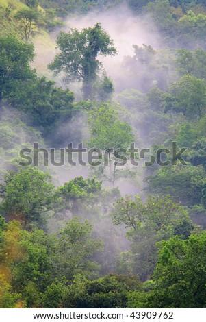 Green forest in misty morning - Uganda Africa - stock photo