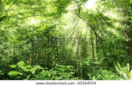 green forest in morning sunlight - stock photo