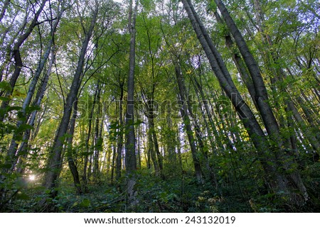 Green forest in the sunshine - stock photo