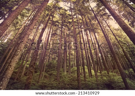 Green forest landscape with a vintage retro instagram filter  - stock photo