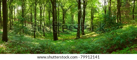 Green forest panorama - stock photo
