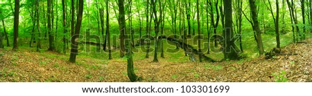 Green forest. Panoramic image. - stock photo