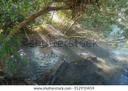 Green forest, river and ray of light - stock photo