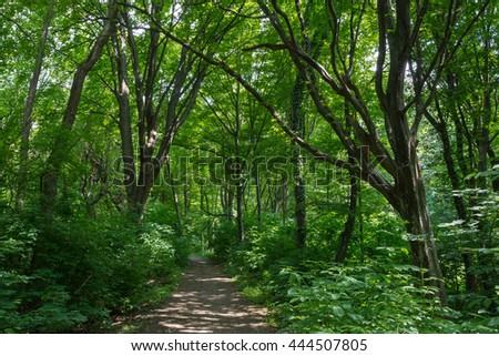Green forest scene in summer / Natural park Medvednica, Zagreb, Croatia / Walking path in forest