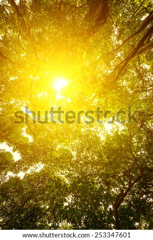 Green forest. Sun light through treetops. Summer. - stock photo