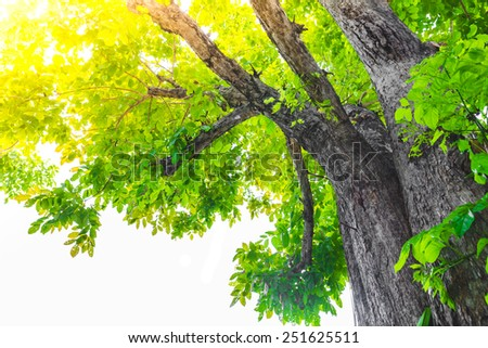 Green forest tree with sunlight - stock photo