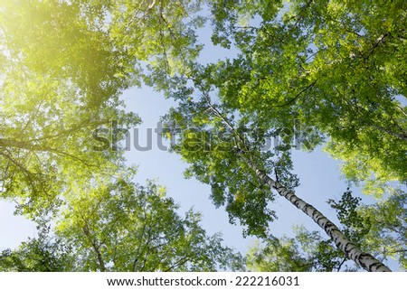Green forest trees - stock photo