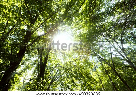 Green Forest Trees Tops and Sun Beams Through Leaves. Summer Sunny Landscape