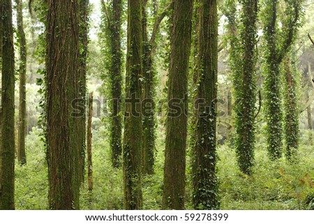 Green forest trees with rocks