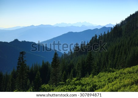 Green forest with blue mountains in the background.
