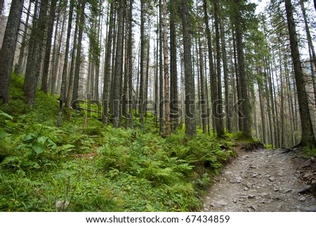 Green forest with fallen trees - stock photo