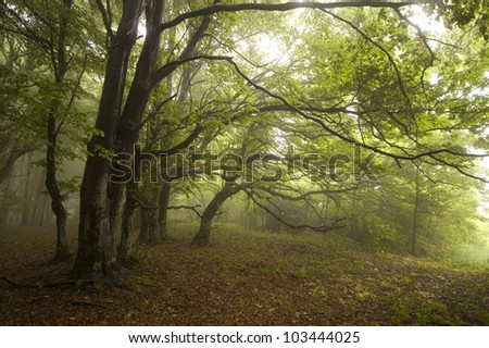 green forest with fog - stock photo