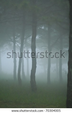 Green forest with fog between trees - stock photo