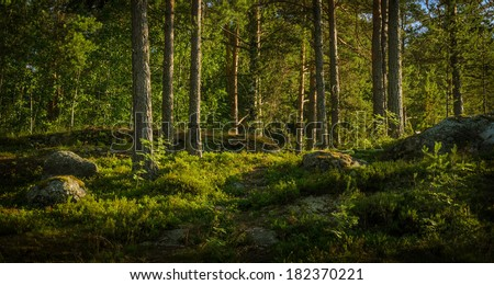 green forest with pines and bushes in backlight - stock photo