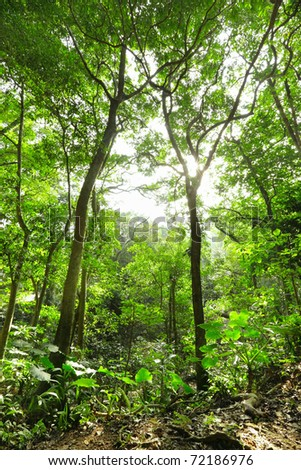 Green forest with ray - stock photo