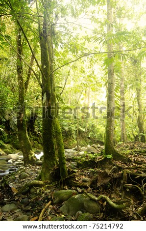 green forest with ray of lights - stock photo