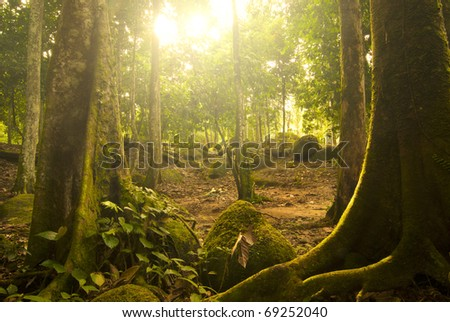 green forest with ray of lights on the morning - stock photo