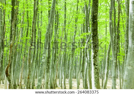 Green forest with snowpack - stock photo