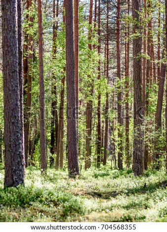 green forest with tree trunks and light rays, shadows in summer - vertical, mobile device ready image