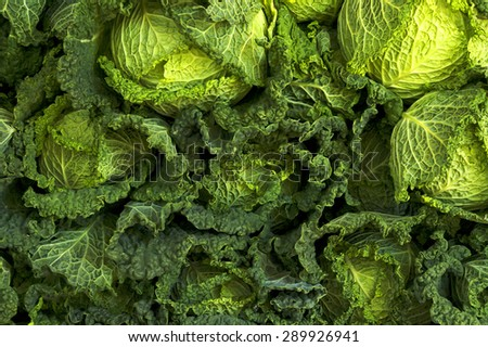 Green freash cabbage background - stock photo