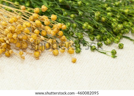Green  fresh and dry flax twigs with linseed on the natural linen fabric background - stock photo