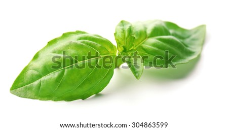 Green fresh basil isolated in white - stock photo