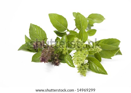Green fresh basil isolated on white
