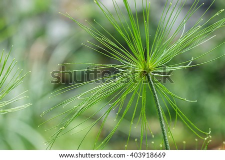 Green Fresh  flower grass with raindrops close up - stock photo