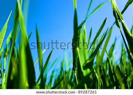 Green fresh grass - stock photo