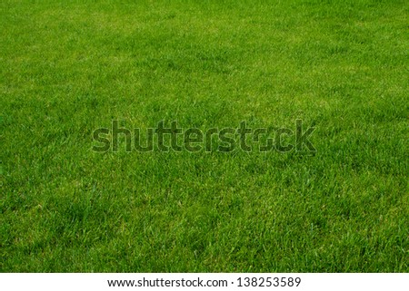 Green fresh grass field kit - stock photo