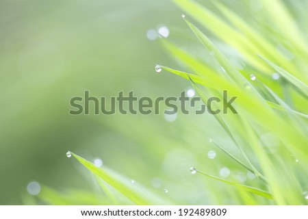 green fresh grass in morning dew with bokeh - stock photo