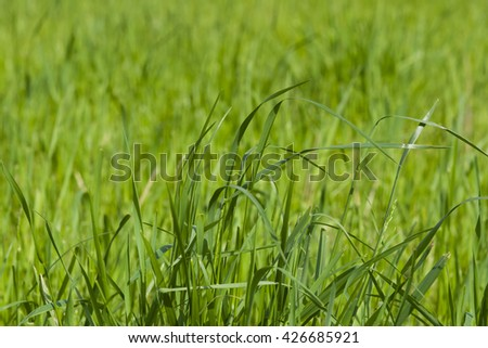 Green fresh grass macro background with bokeh, selective focus, shallow DOF - stock photo