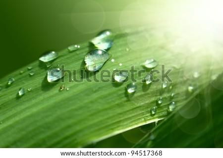 Green fresh grass with drop in summer sunlight - stock photo