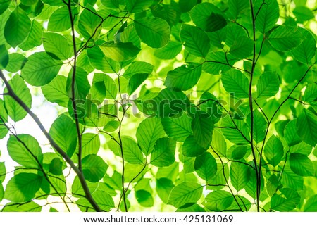 Green fresh leaves on a forest tree - stock photo