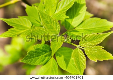 Green fresh leaves on a tree - stock photo