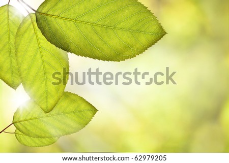 Green fresh leaves on tree with shallow depth of field - stock photo