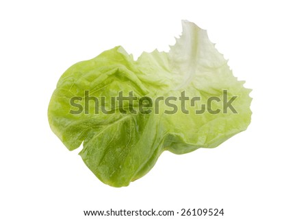 Green fresh lettuce salad food isolated on a white background.