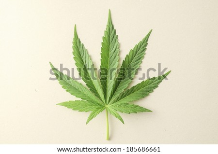 Green Fresh Marijuana Leaf with Seven Tips - stock photo
