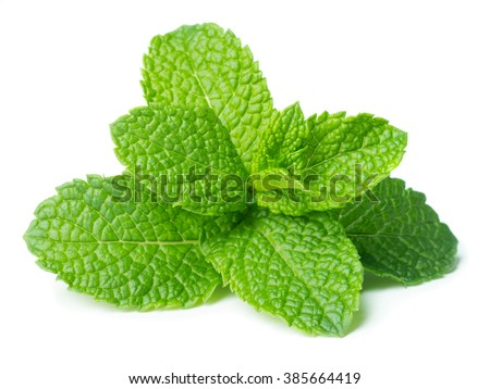 Green fresh mint leaves isolated on white background - stock photo