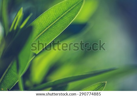 Green fresh plants grass closeup for background - stock photo