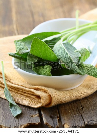 green fresh sage - herb spice on a wooden table - stock photo