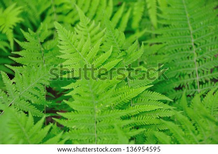 Green fresh spring ferns in the forest - stock photo