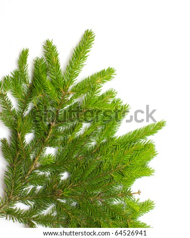 Green fresh spruce branch isolated on white