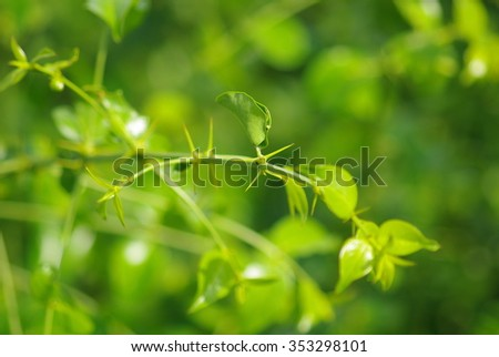 Green Fresh Thorn. - stock photo