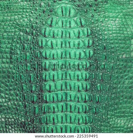 Green Freshwater crocodile bone skin texture - stock photo