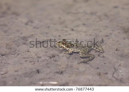 green frog - stock photo
