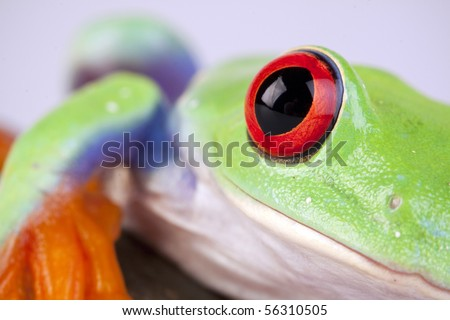 Green frog based on white background with rock - stock photo