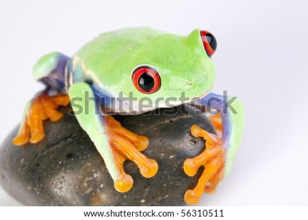 Green frog based on white background with rock