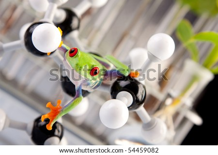 Green frog in laboratory - stock photo