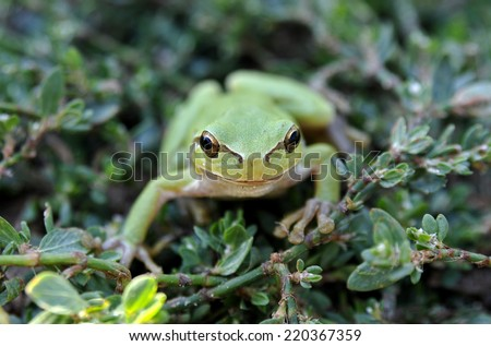 Green frog in the grass - stock photo